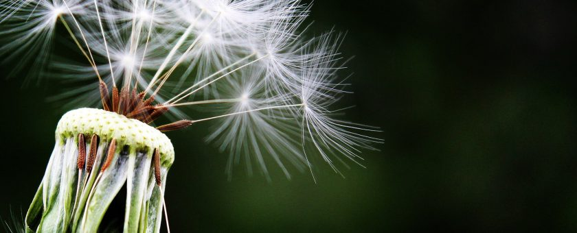 Wiosna, czyli najtrudniejszy czas dla alergików