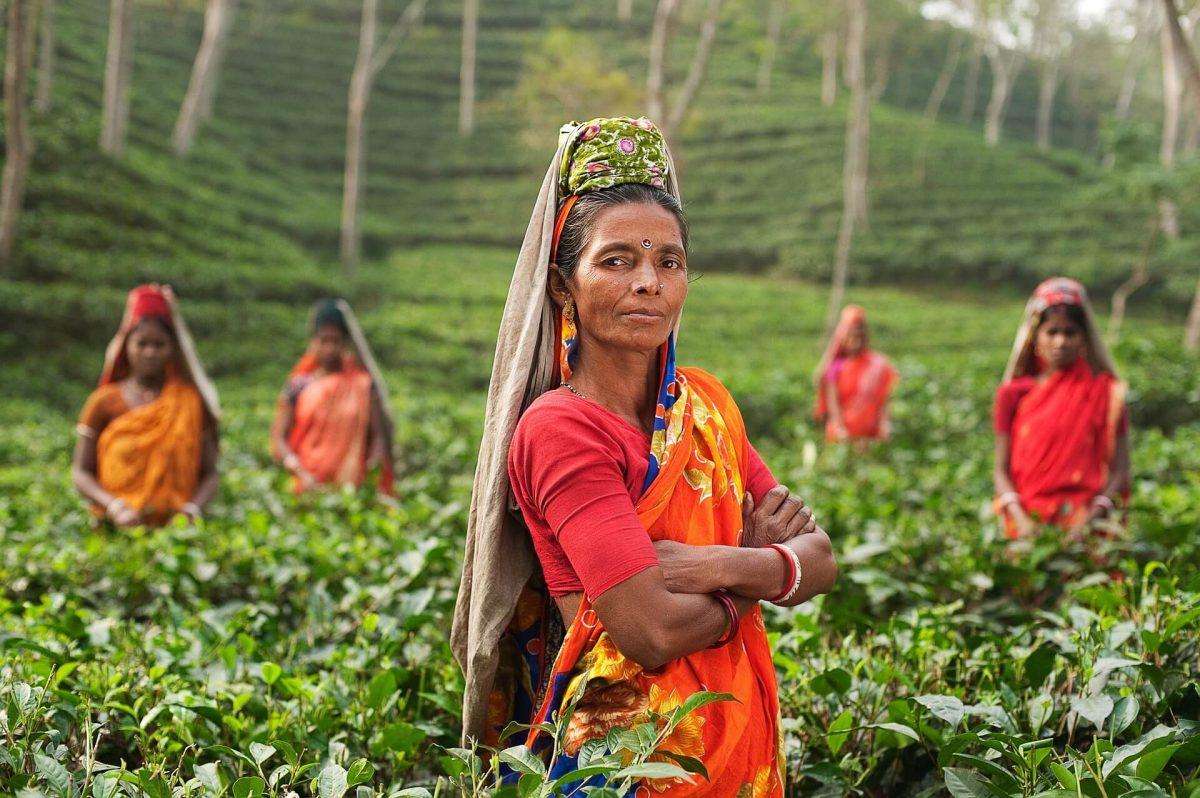 Starsza-kobieta-z-indii-na-plantacji-czerwonej-herbaty