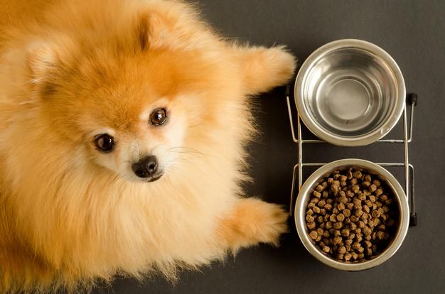 Jak wprowadzać nową karmę do diety swojego psa?