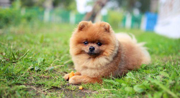 Czy psy powinny jeść marchewkę?